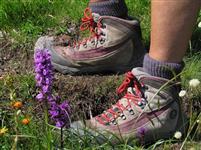 ÉQUIPEMENT : Chaussures à tige haute ou basse ?