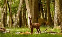 Pourquoi chasse-t-on en forêt domaniale ?